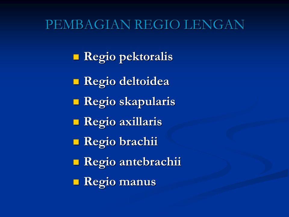 PEMBAGIAN REGIO LENGAN