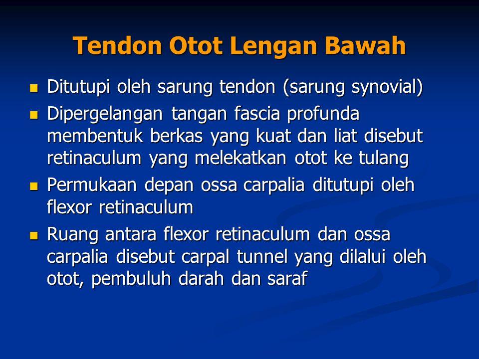 Tendon Otot Lengan Bawah