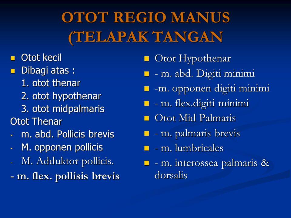 OTOT REGIO MANUS (TELAPAK TANGAN