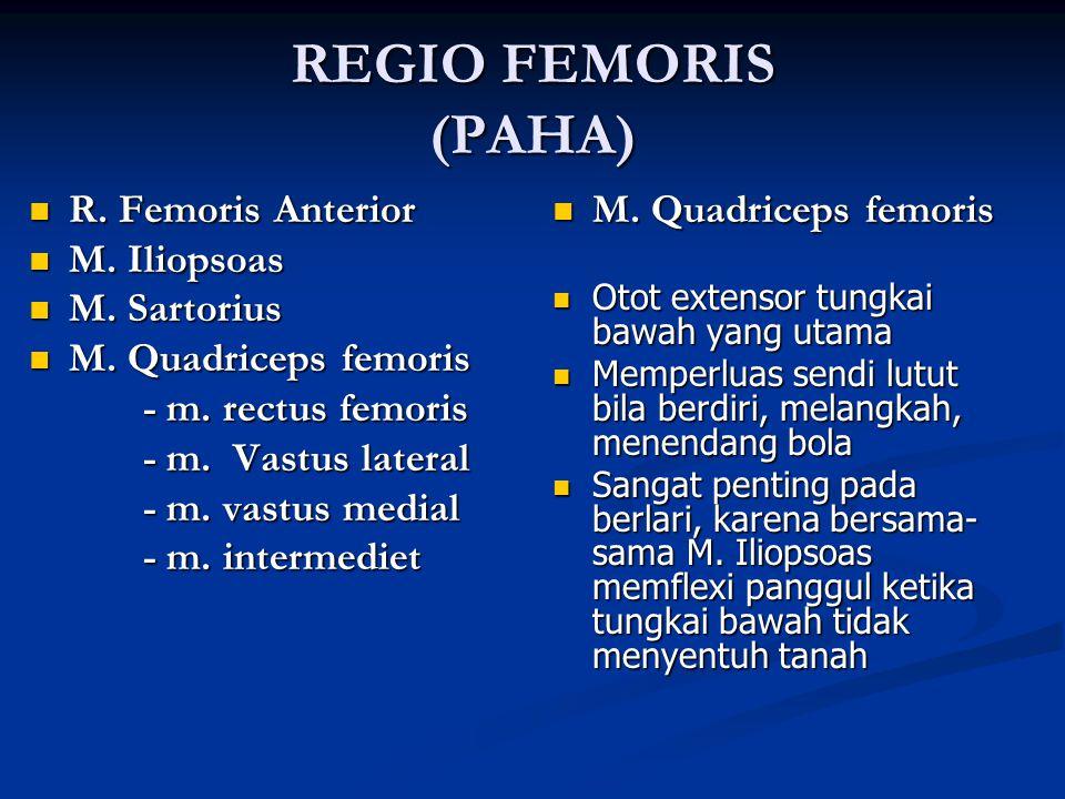 REGIO FEMORIS (PAHA) R. Femoris Anterior M. Iliopsoas M. Sartorius