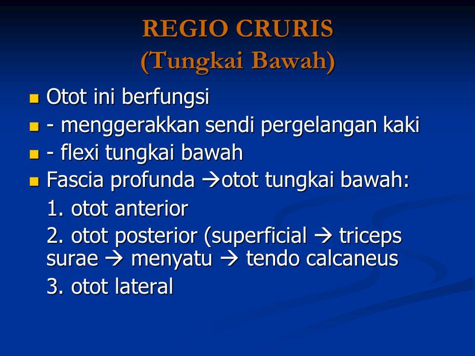 REGIO CRURIS (Tungkai Bawah)
