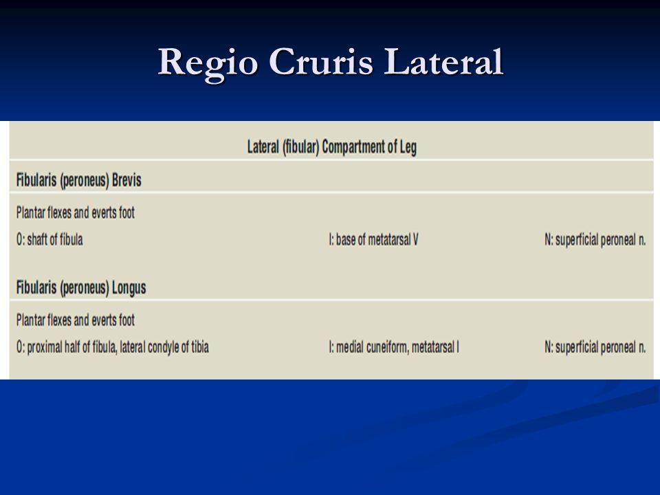 Regio Cruris Lateral