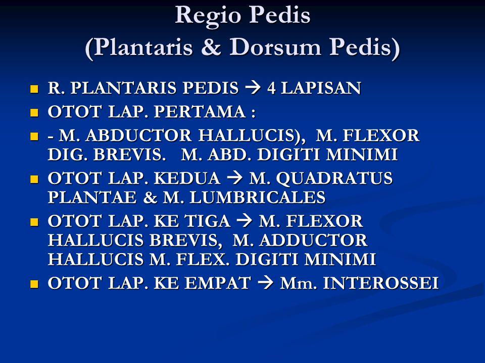 Regio Pedis (Plantaris & Dorsum Pedis)