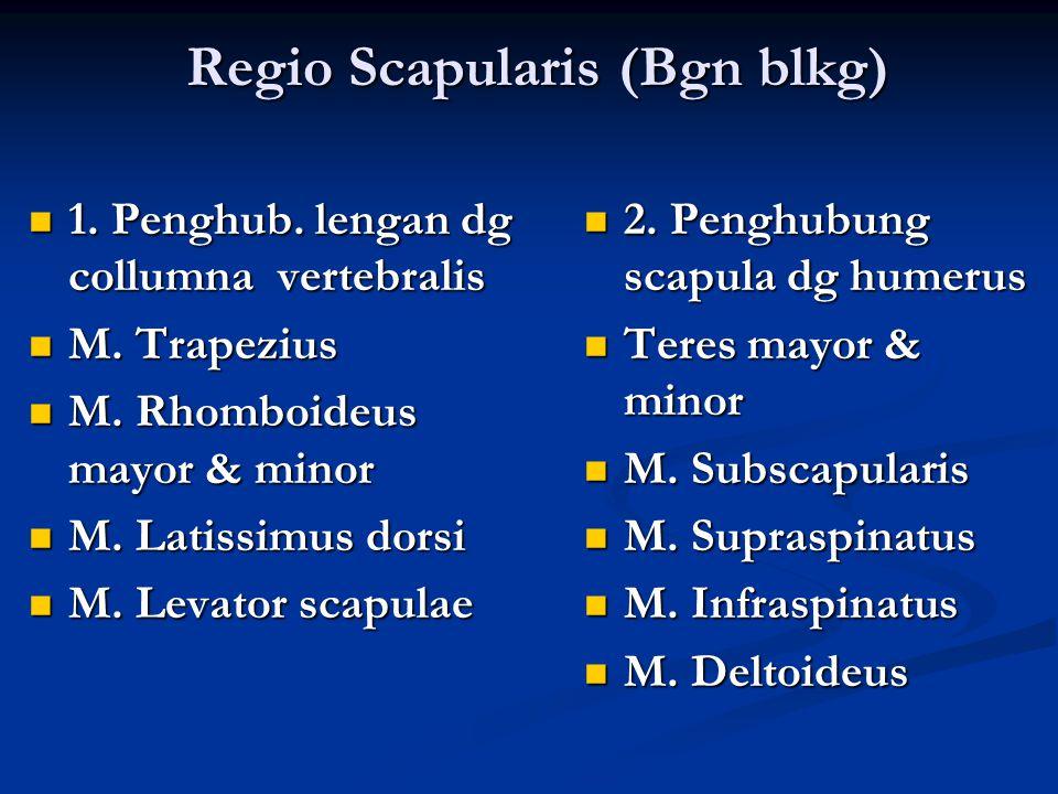 Regio Scapularis (Bgn blkg)
