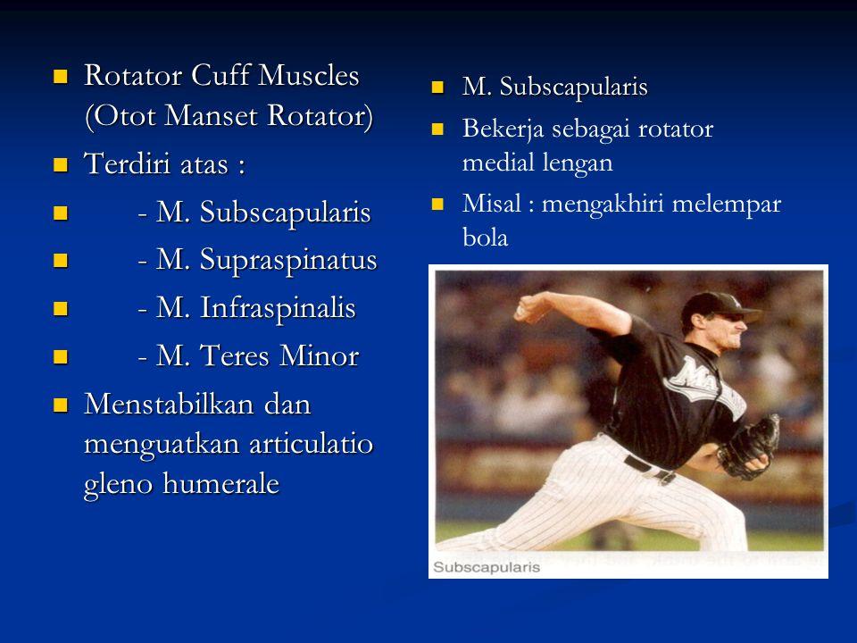 Rotator Cuff Muscles (Otot Manset Rotator) Terdiri atas :
