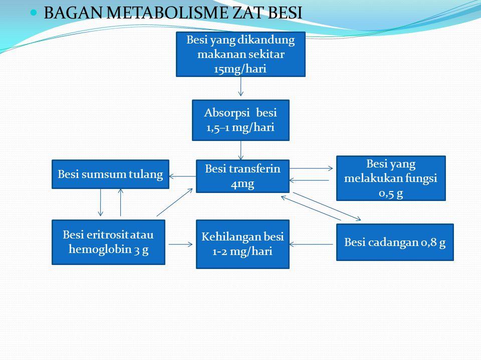 BAGAN METABOLISME ZAT BESI