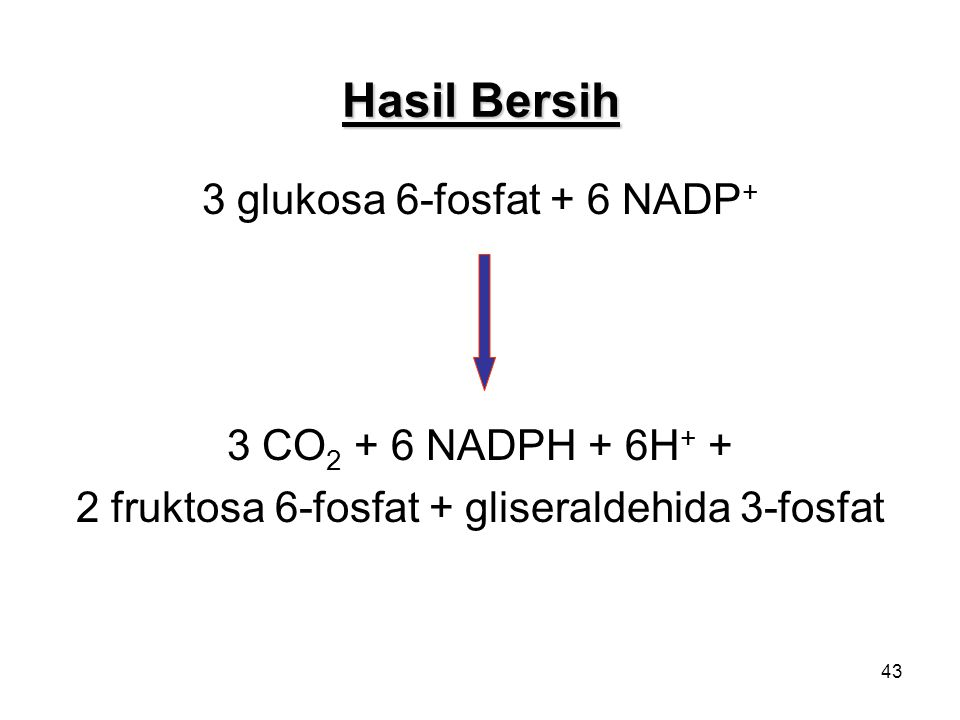 Hasil Bersih 3 glukosa 6-fosfat + 6 NADP+ 3 CO2 + 6 NADPH + 6H+ +