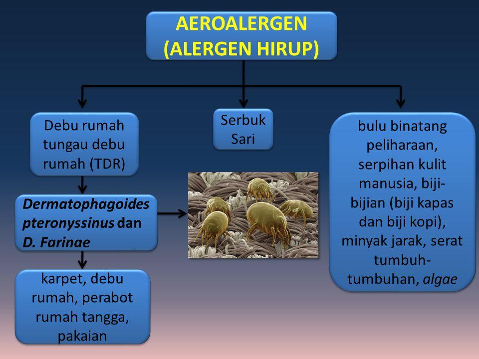AEROALERGEN (ALERGEN HIRUP)