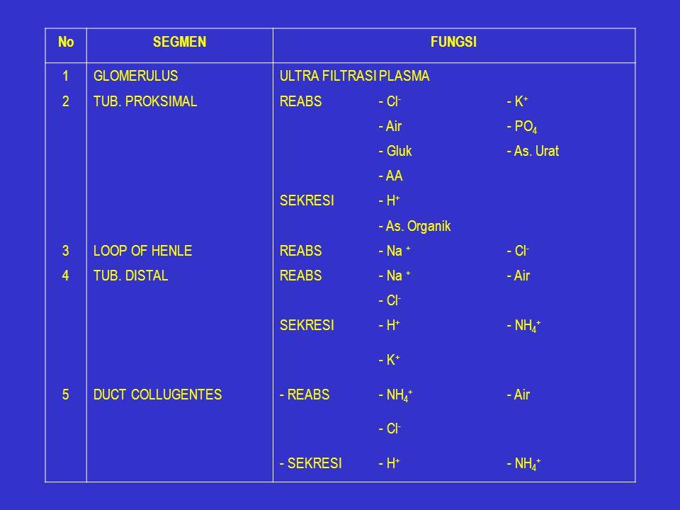 No SEGMEN. FUNGSI. 1. GLOMERULUS. ULTRA FILTRASI PLASMA. 2. TUB. PROKSIMAL. REABS. - Cl- - K+