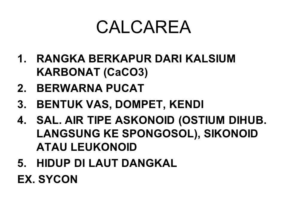 CALCAREA RANGKA BERKAPUR DARI KALSIUM KARBONAT (CaCO3) BERWARNA PUCAT