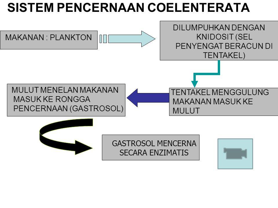 SISTEM PENCERNAAN COELENTERATA