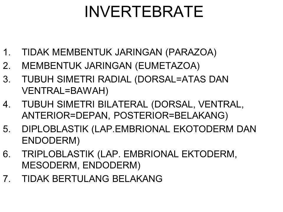 INVERTEBRATE TIDAK MEMBENTUK JARINGAN (PARAZOA)