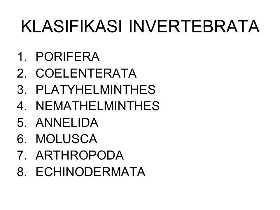 KLASIFIKASI INVERTEBRATA