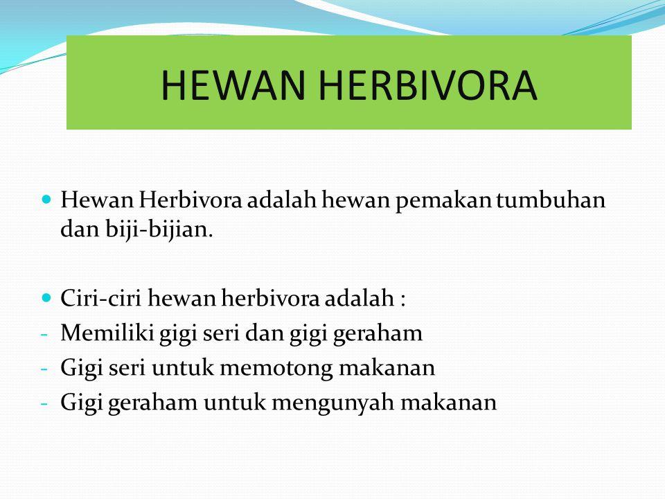 HEWAN HERBIVORA Hewan Herbivora adalah hewan pemakan tumbuhan dan biji-bijian. Ciri-ciri hewan herbivora adalah :
