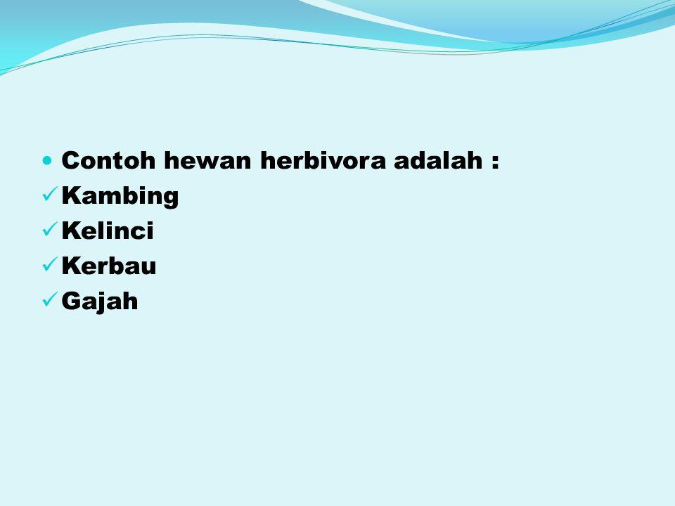 Contoh hewan herbivora adalah :