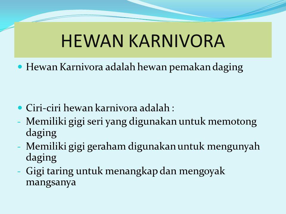 HEWAN KARNIVORA Hewan Karnivora adalah hewan pemakan daging