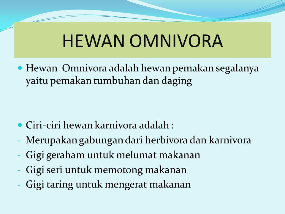 HEWAN OMNIVORA Hewan Omnivora adalah hewan pemakan segalanya yaitu pemakan tumbuhan dan daging. Ciri-ciri hewan karnivora adalah :