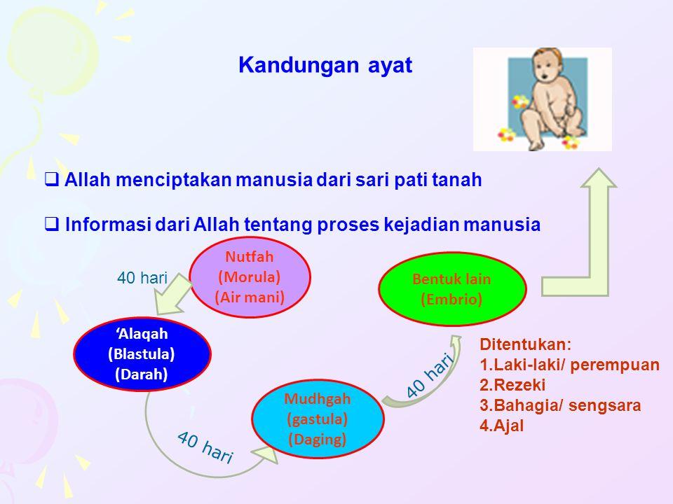 Kandungan ayat Allah menciptakan manusia dari sari pati tanah