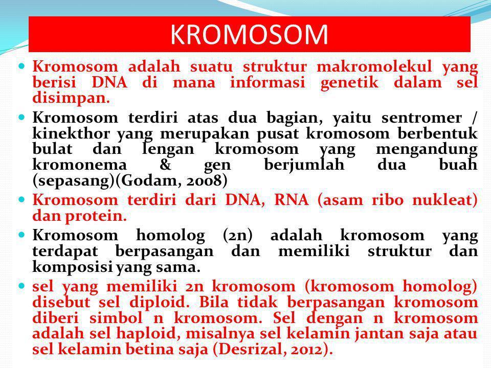 KROMOSOM Kromosom adalah suatu struktur makromolekul yang berisi DNA di mana informasi genetik dalam sel disimpan.
