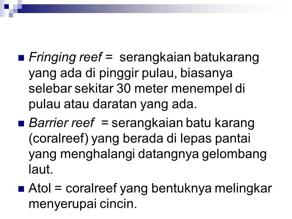 Fringing reef = serangkaian batukarang yang ada di pinggir pulau, biasanya selebar sekitar 30 meter menempel di pulau atau daratan yang ada.