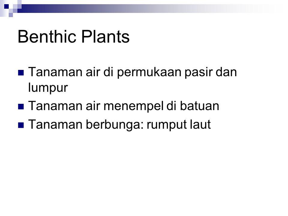 Benthic Plants Tanaman air di permukaan pasir dan lumpur
