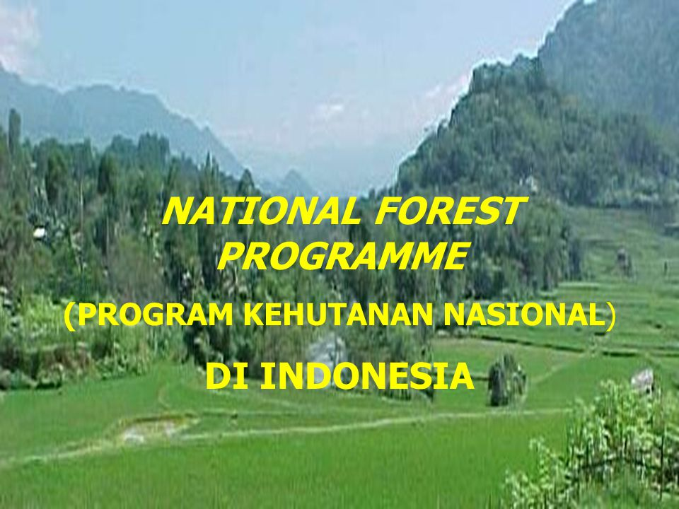 NATIONAL FOREST PROGRAMME