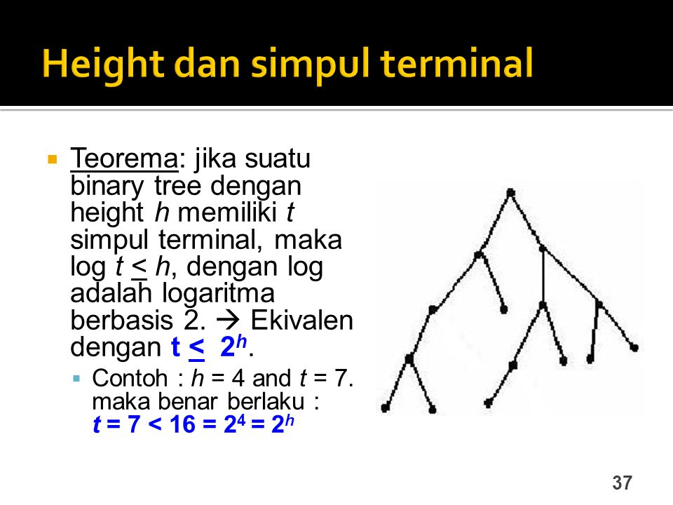 Height dan simpul terminal