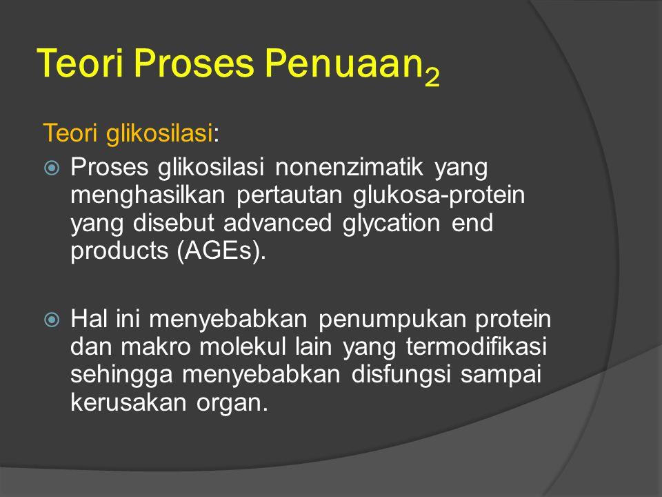 Teori Proses Penuaan2 Teori glikosilasi: