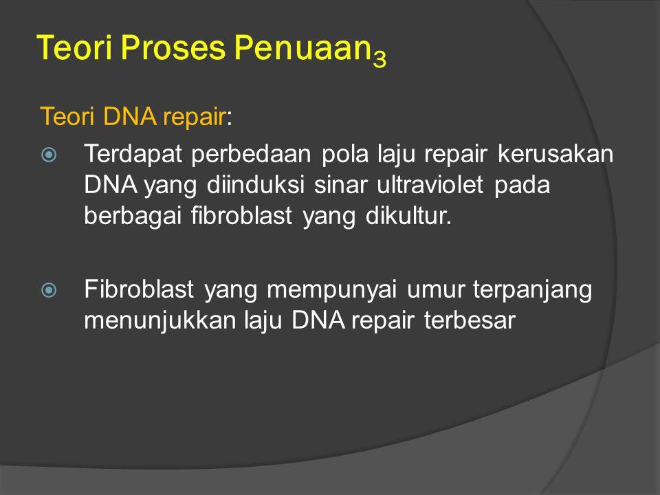 Teori Proses Penuaan3 Teori DNA repair:
