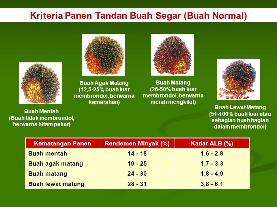 Kriteria Panen Tandan Buah Segar (Buah Normal)