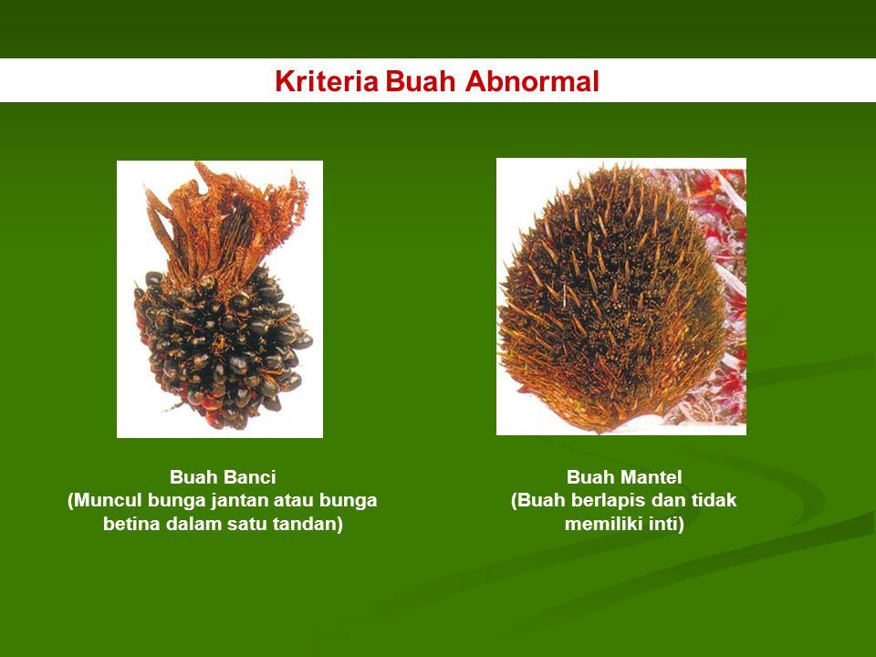 Kriteria Buah Abnormal