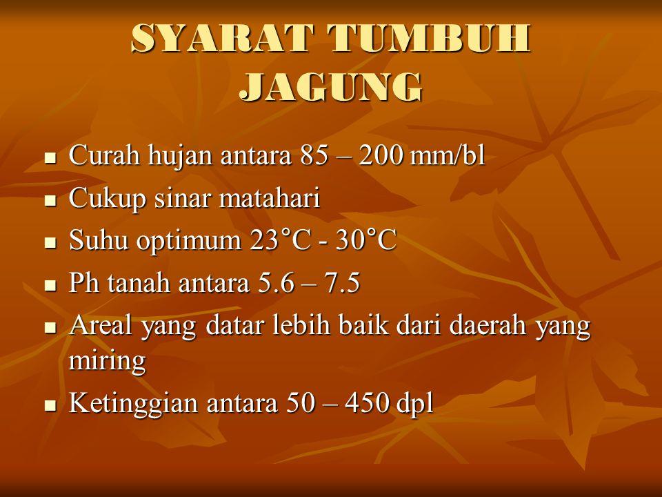 SYARAT TUMBUH JAGUNG Curah hujan antara 85 – 200 mm/bl