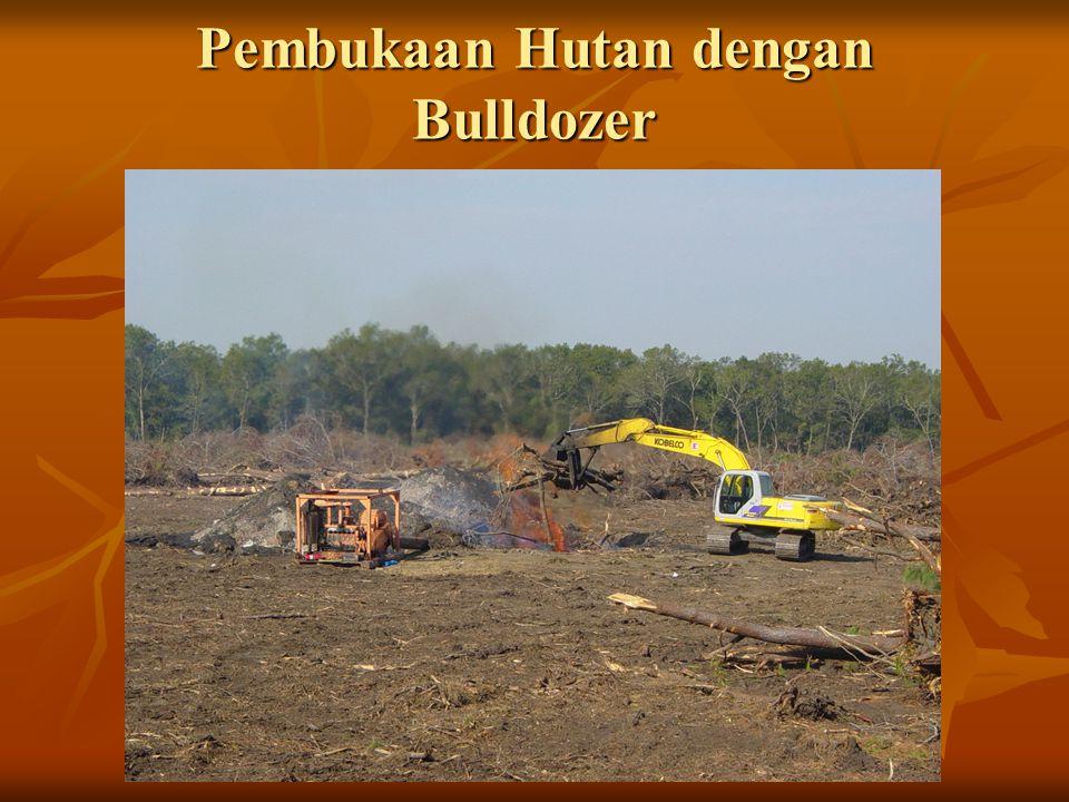 Pembukaan Hutan dengan Bulldozer