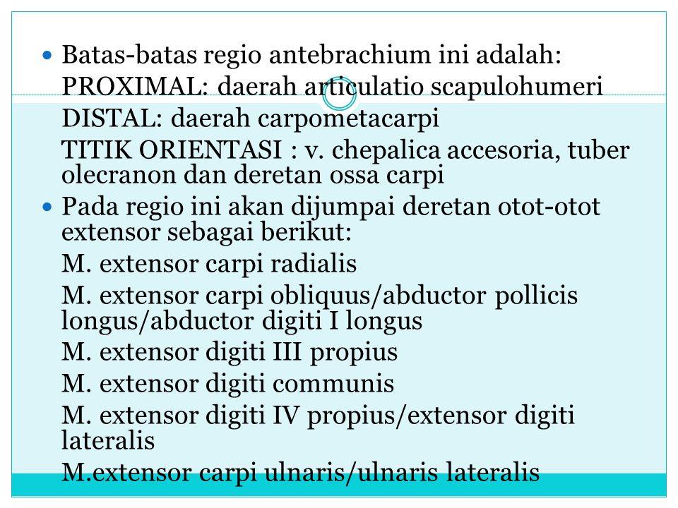 Batas-batas regio antebrachium ini adalah: