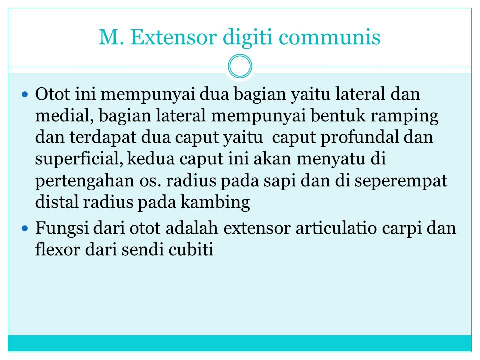 M. Extensor digiti communis