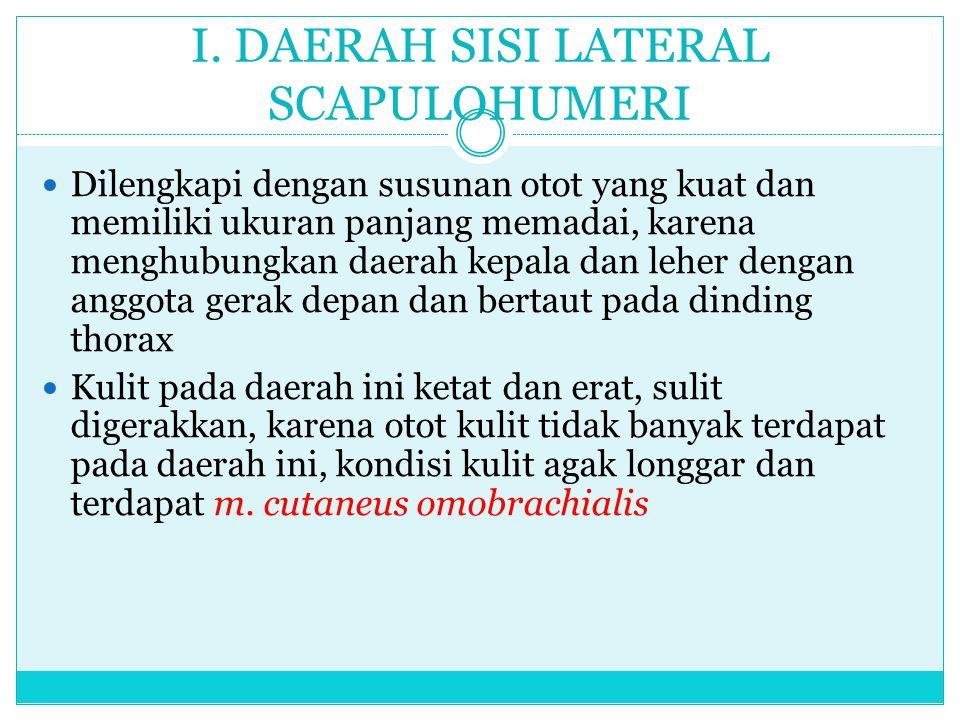 I. DAERAH SISI LATERAL SCAPULOHUMERI