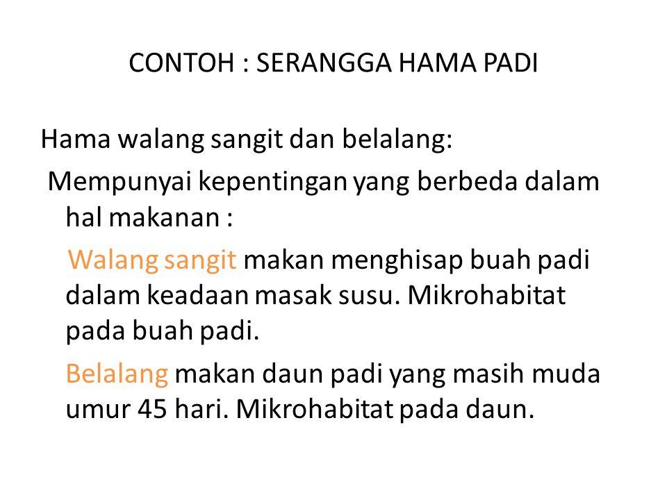 CONTOH : SERANGGA HAMA PADI