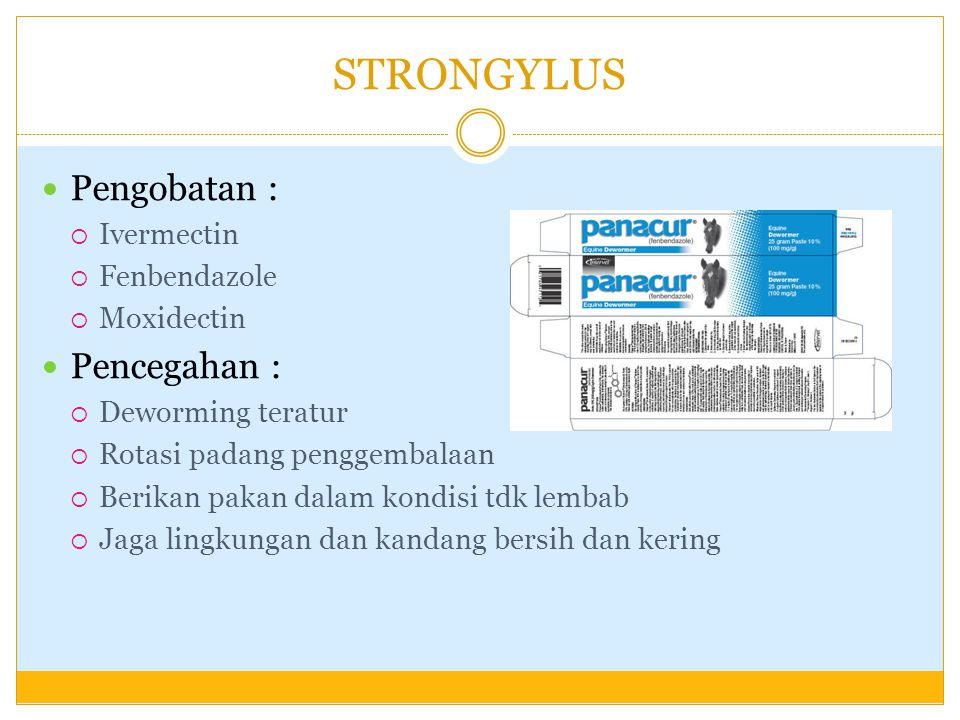 STRONGYLUS Pengobatan : Pencegahan : Ivermectin Fenbendazole