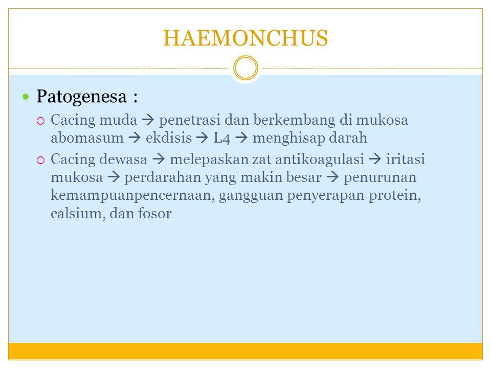 HAEMONCHUS Patogenesa :