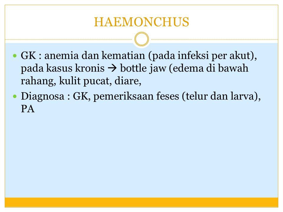 HAEMONCHUS GK : anemia dan kematian (pada infeksi per akut), pada kasus kronis  bottle jaw (edema di bawah rahang, kulit pucat, diare,
