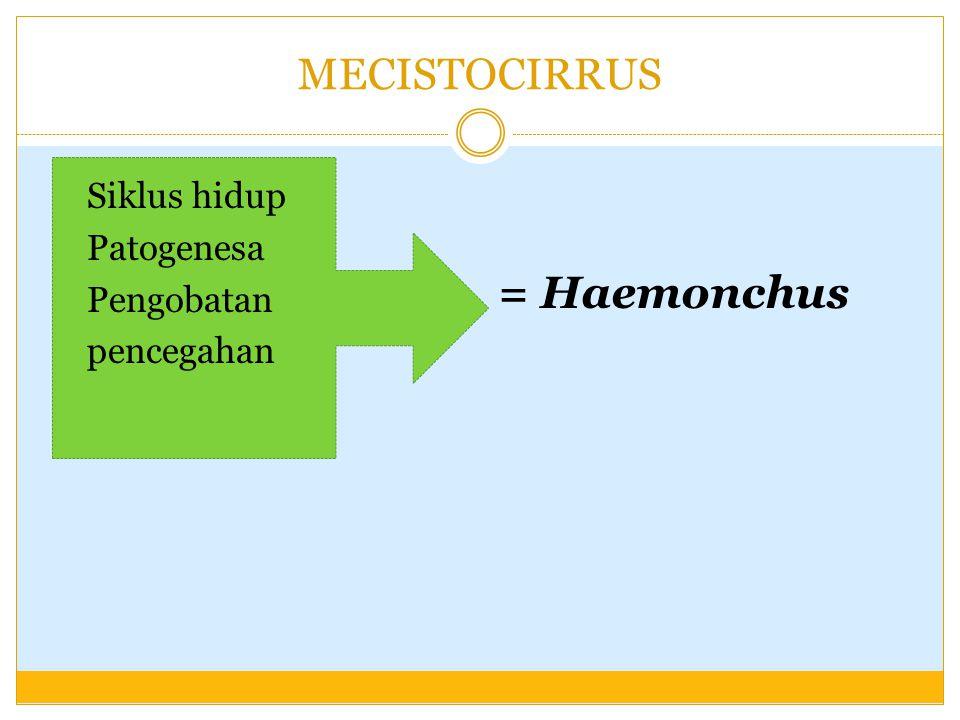 = Haemonchus MECISTOCIRRUS Siklus hidup Patogenesa Pengobatan