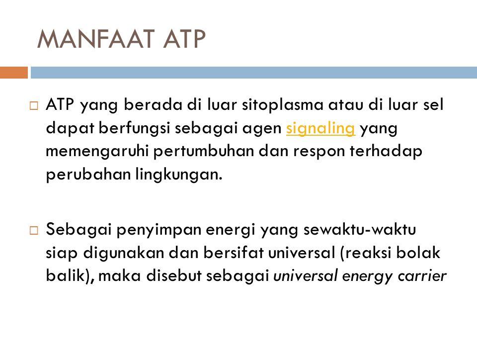 MANFAAT ATP
