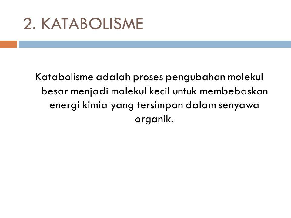 2. KATABOLISME