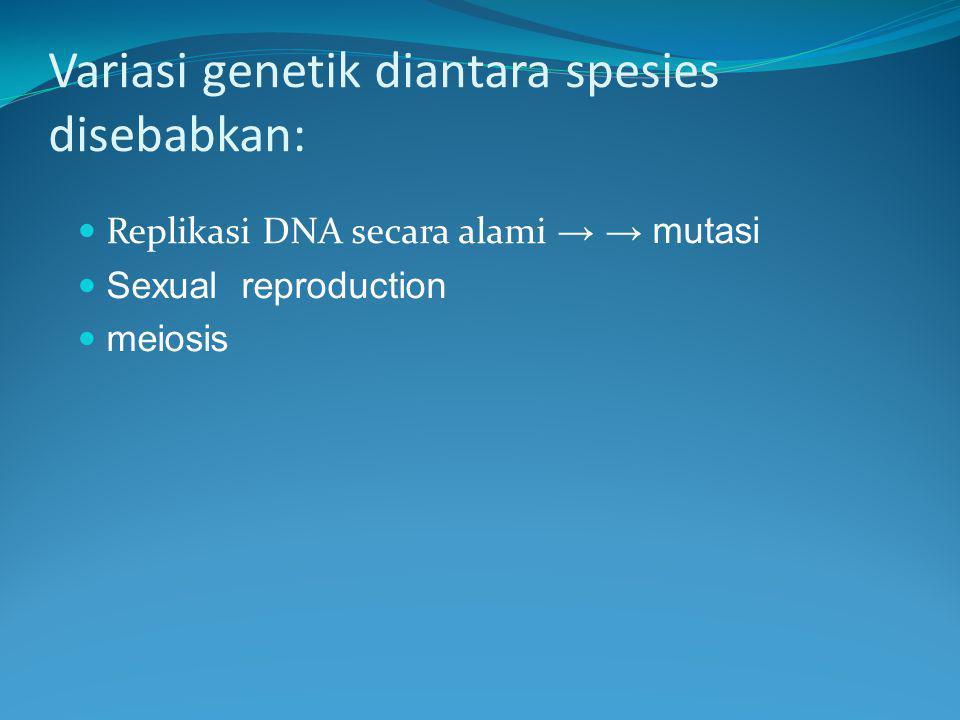 Variasi genetik diantara spesies disebabkan: