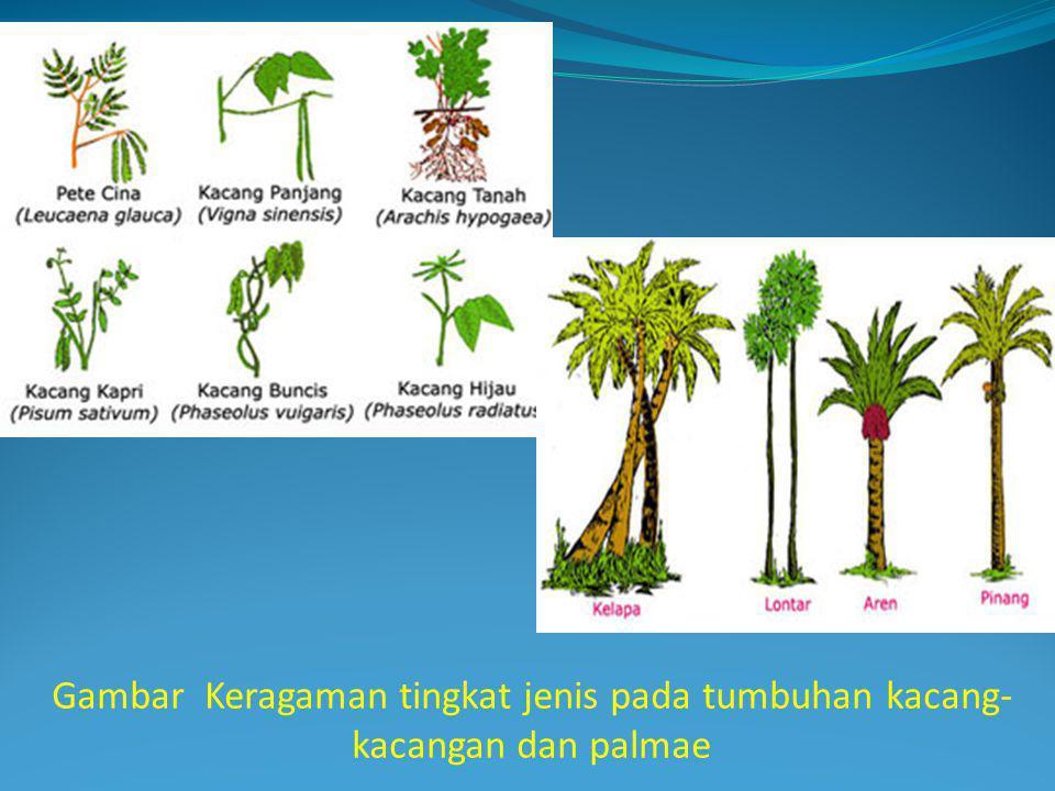 Gambar Keragaman tingkat jenis pada tumbuhan kacang-kacangan dan palmae