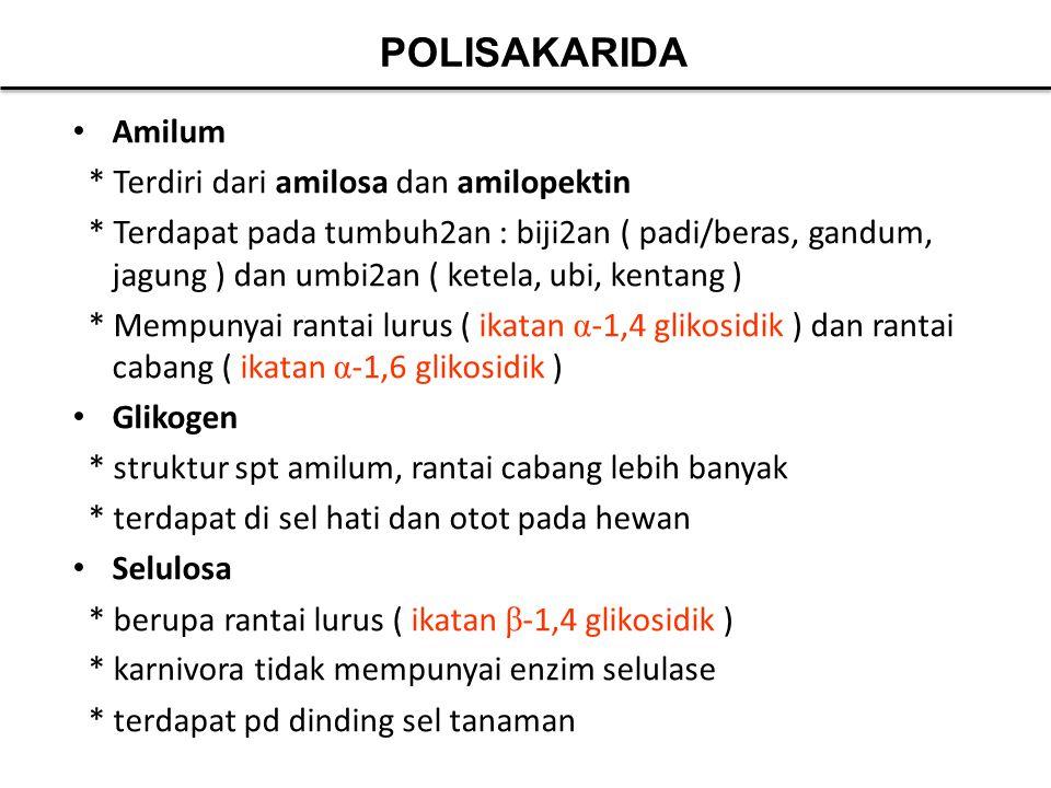 POLISAKARIDA Amilum * Terdiri dari amilosa dan amilopektin