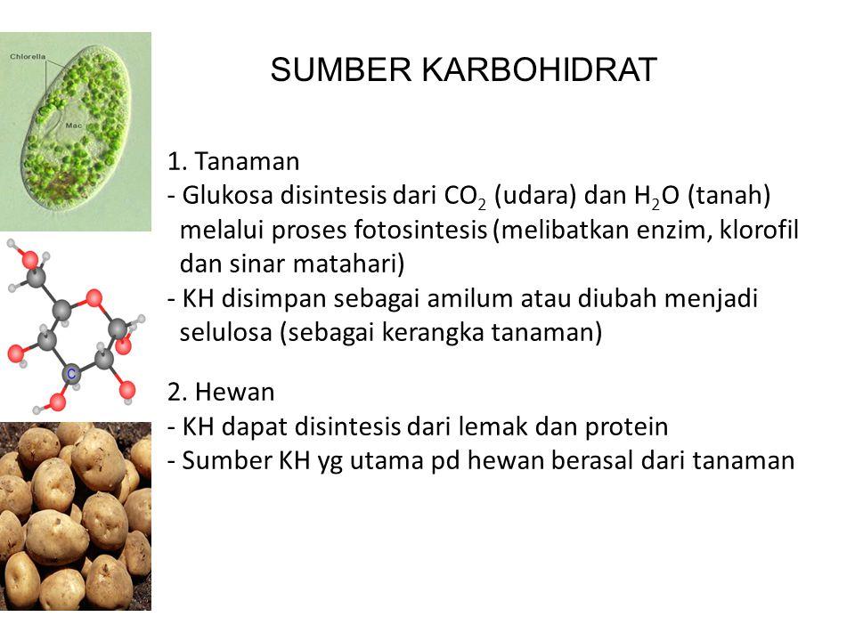 SUMBER KARBOHIDRAT 1. Tanaman