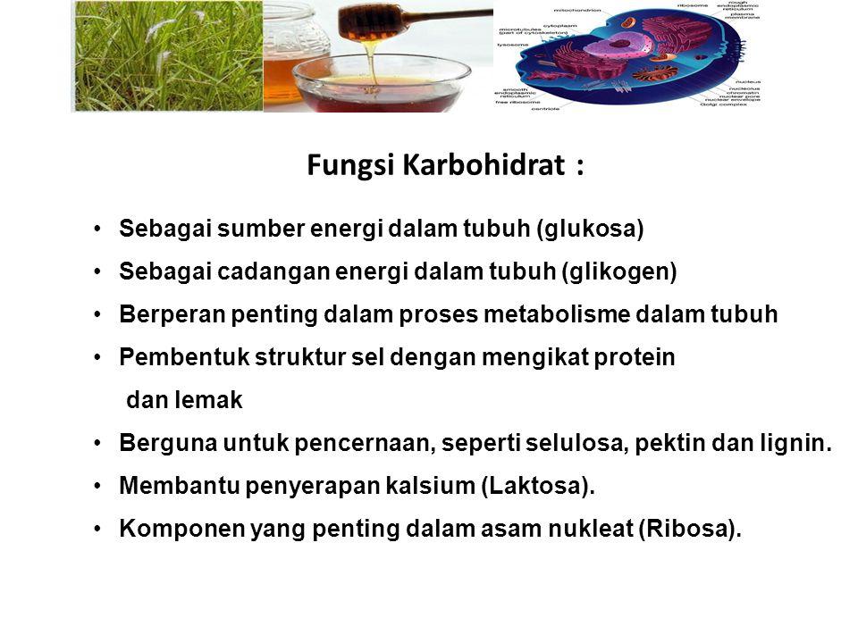 Fungsi Karbohidrat : Sebagai sumber energi dalam tubuh (glukosa)