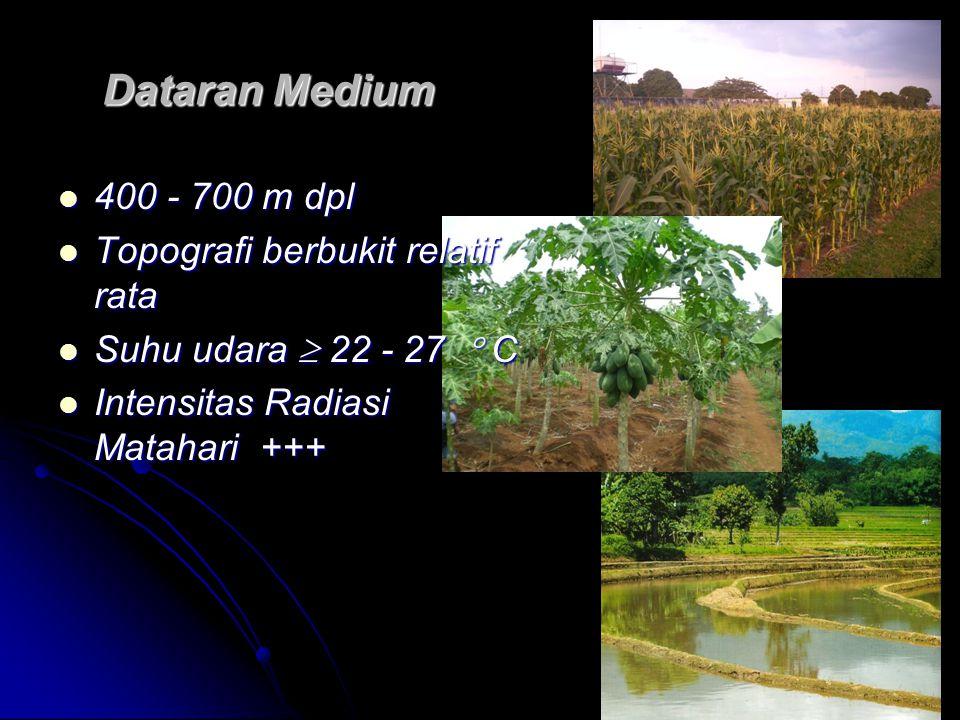 Dataran Medium 400 - 700 m dpl Topografi berbukit relatif rata