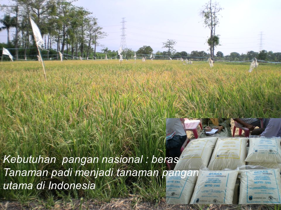 Kebutuhan pangan nasional : beras